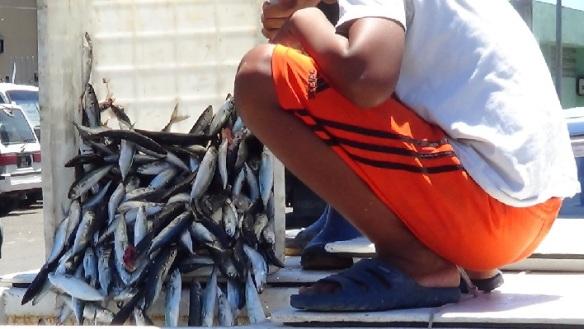Fisch10502