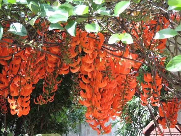 Blütenpracht Gartendschungel