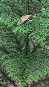 weihnachtsbaum satun