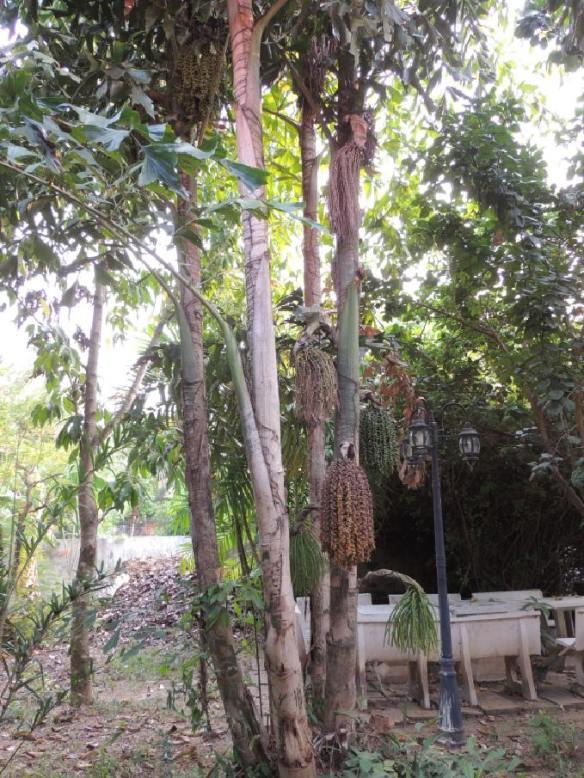 Garten CNX