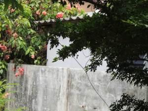 Garten2573