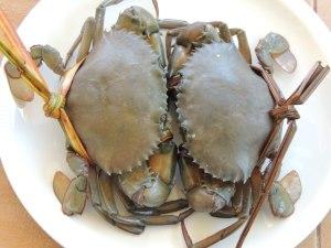 krabbler